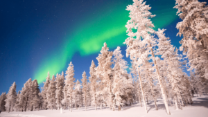 Green aurora borealis floating over trees covered in snow