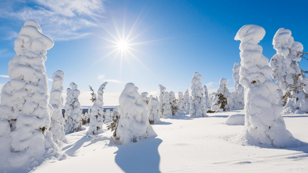 Pure snow on a sunny day